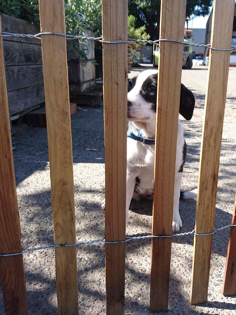 Redwood Fence Board Picket Wholesale Cedar Lodi Ca